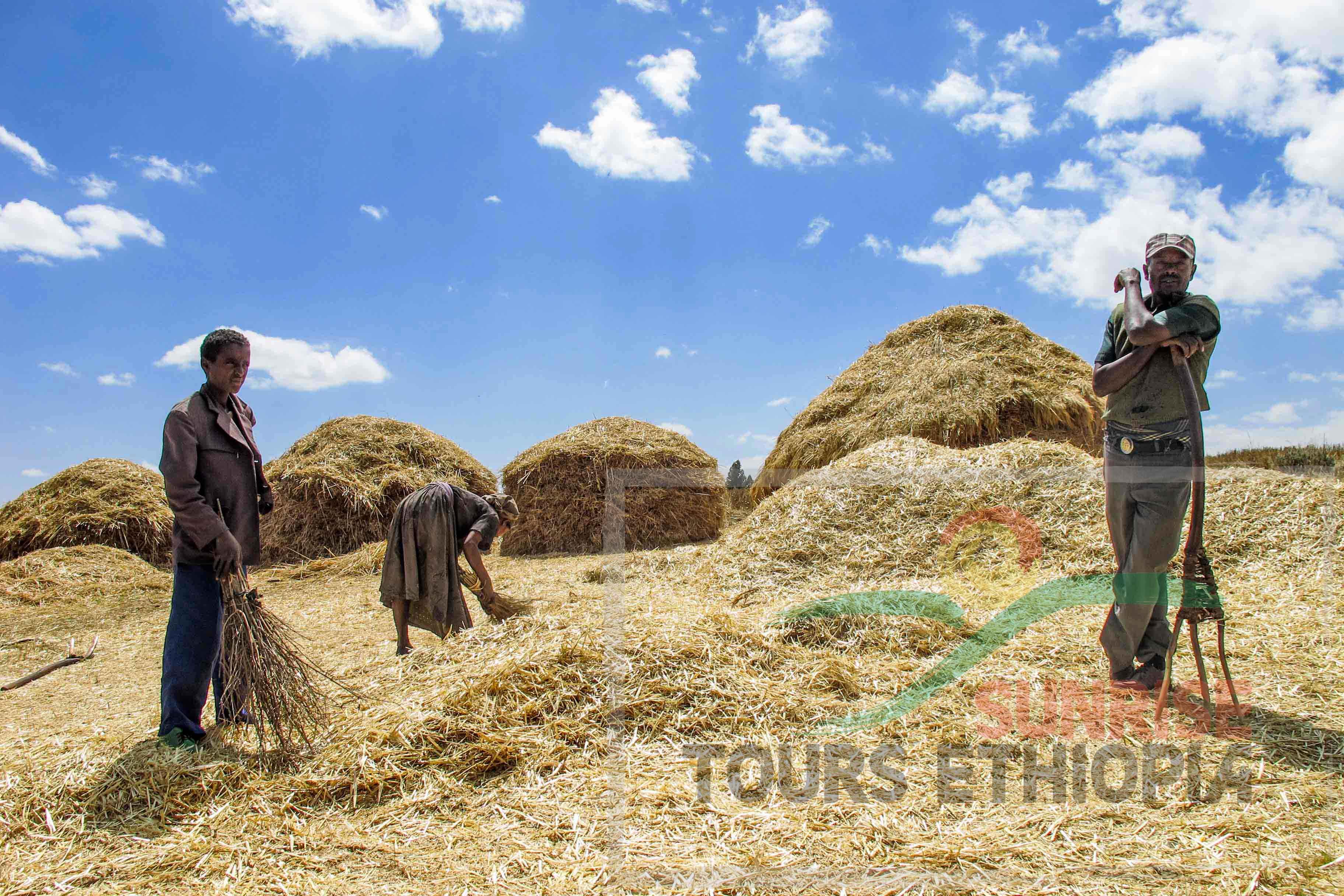 OROMO FARMERS ETHIOPIA